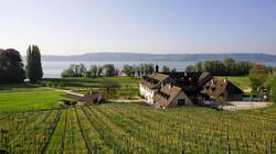 Blick auf Rebberge und den Bielersee