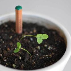萌芽生態種子鉛筆
