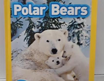 Welcome Back & Polar Bears