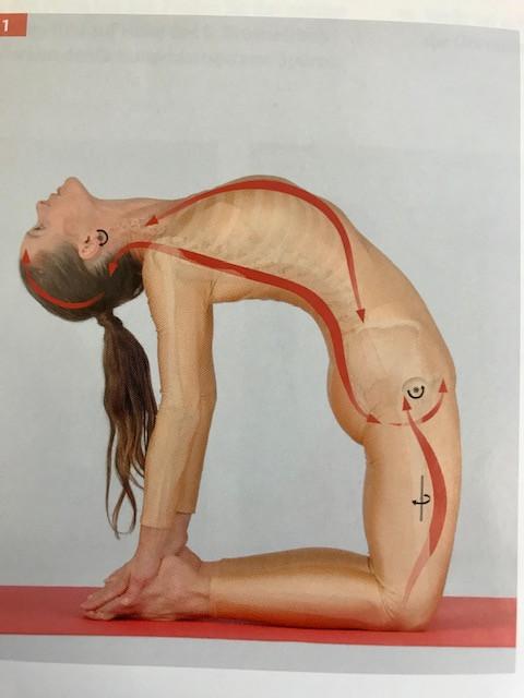 Aus  Medical Yoga professional