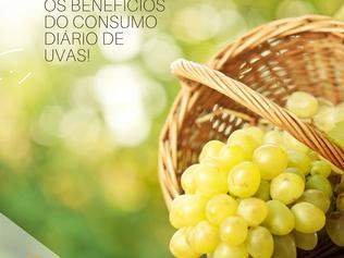 Conheça o poder das uvas para a sua saúde!