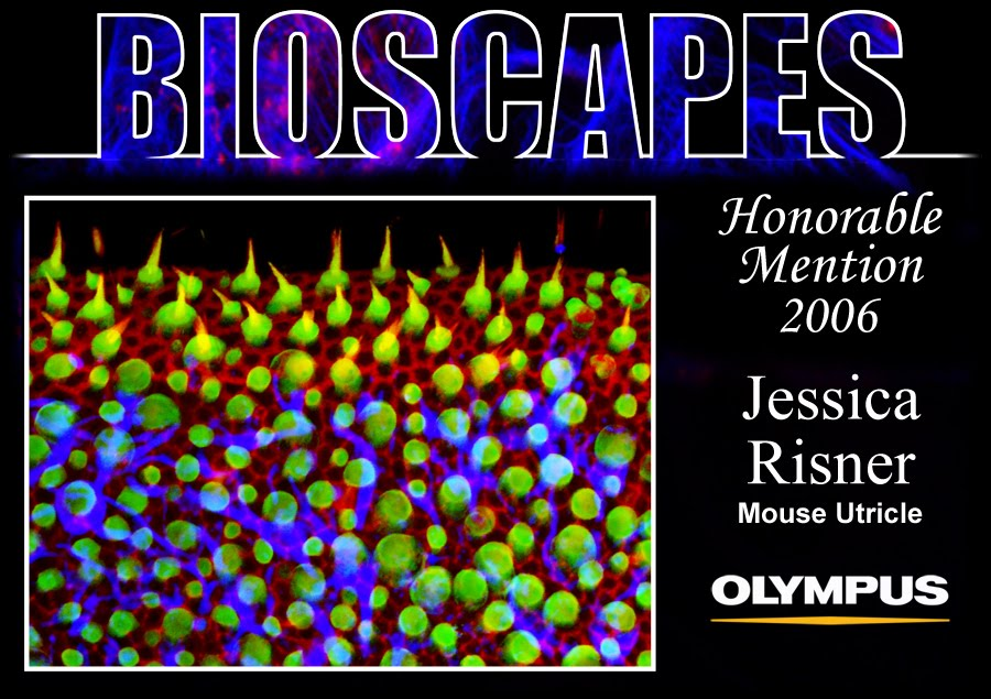 Bioscapes Honorable Mention 2006