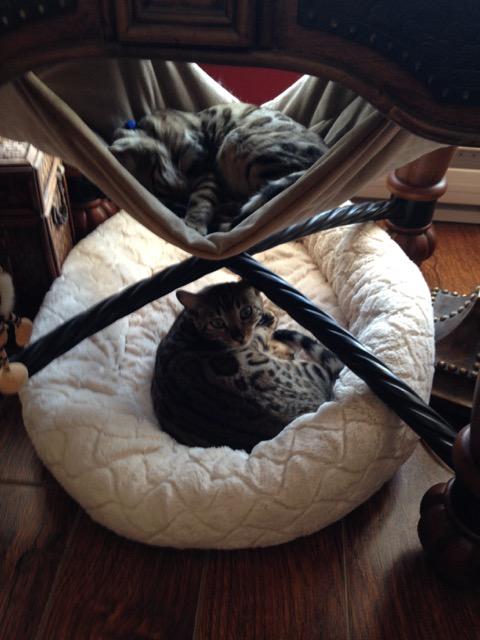 lit et hamac sous la table de salon