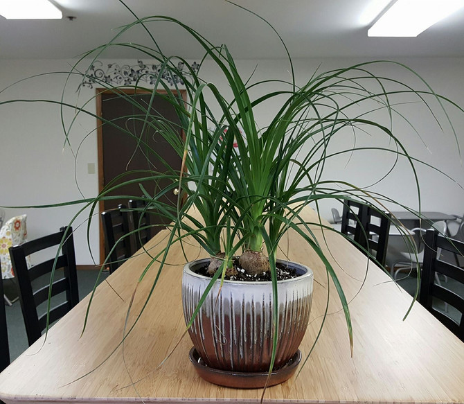 Staging your Plants or Arrangements