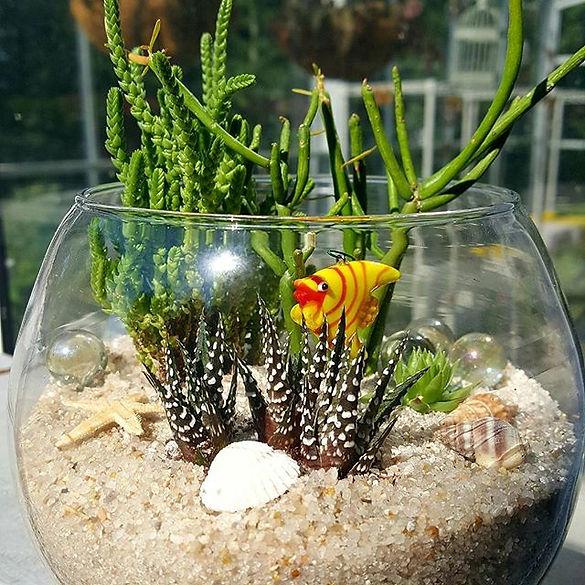 Plant Workshop Succulents Birthday Parties