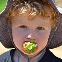 We Love Strawberries!