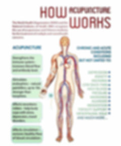 how acupuncture works WHO.jpg