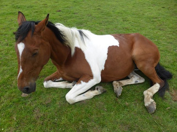Horse Relaxed after Reiki