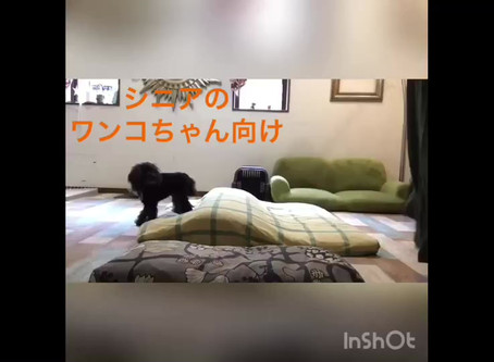 【Stay Home】みんなで室内で遊んでみよう! part 4