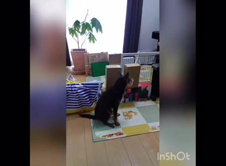【Stay Home】みんなで室内で遊んでみよう!part 2