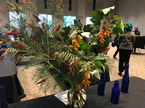 PLANT OF THE MONTH: April 2017 Plant Display