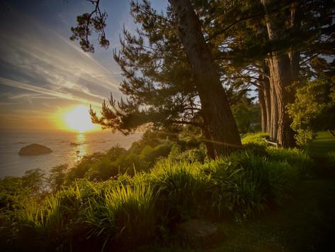 MY LIFE IN PLANTS: California Adventure Part 5