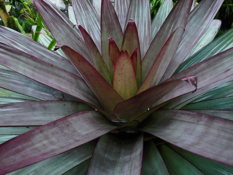 MY LIFE WITH PLANTS: Costa Rican Riches - Around San José