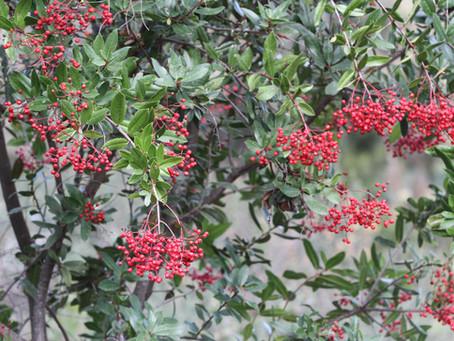TO LEARN MORE: Fantastic Foliage