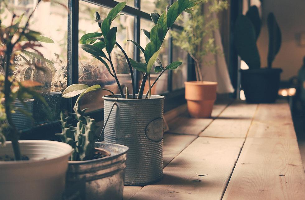 Plants on the Window_edited.jpg