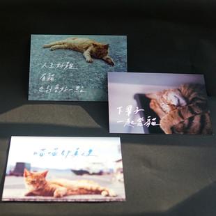 貓貓明信片(多款)