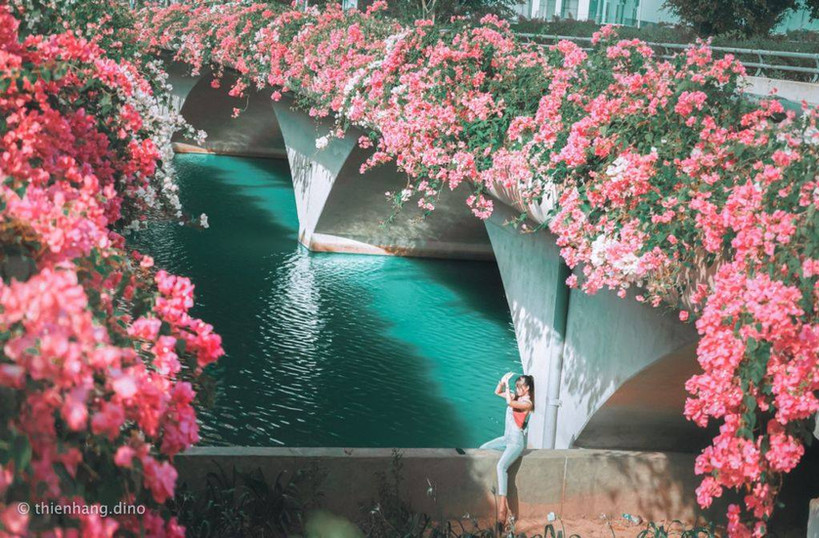 Beautiful bougainvillea flowers blooming on the side of the bridge in Ho Chi Minh City