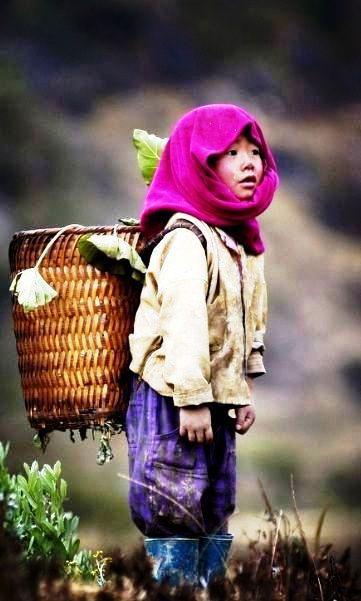 IELTS for Success!! Project Vietnam 1