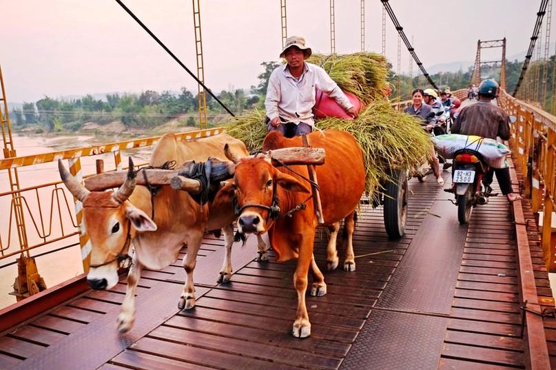The farmer crossing the bridge in a wagon full of hay in Vietnam