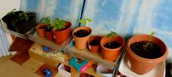 Les plantes des maternelles