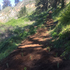 JPB planting trail 2.jpeg