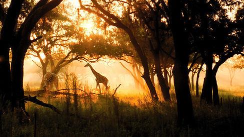 animal-kingdom-lodge-savannah.jpg