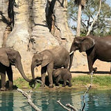 animal-kingdom-tours.jpg