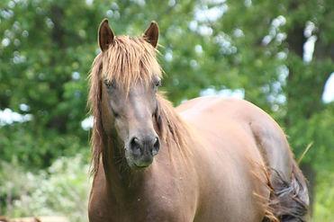 Horse, Dreamchaser PMU