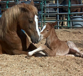 Rush, one of the PMU mares that was saved.