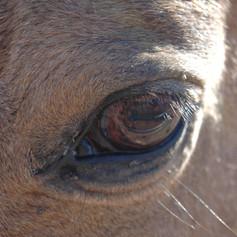 Essence Eye.JPG