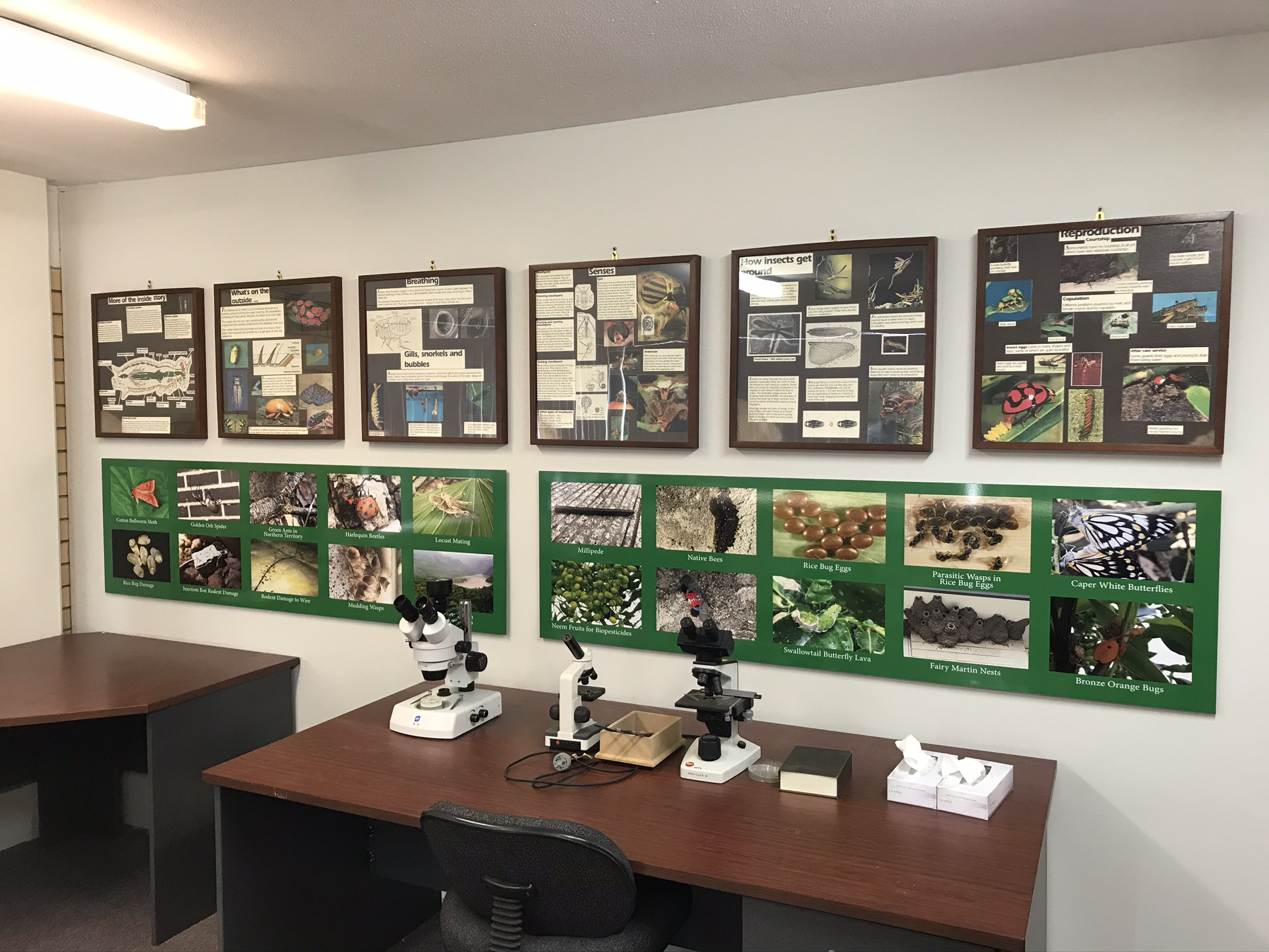 General Pests - Posters & Microscope