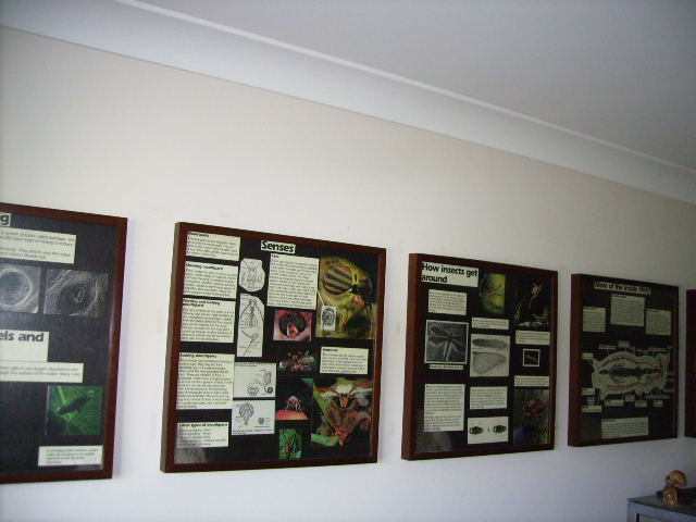 Display Posters