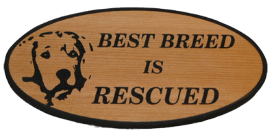 Best Breed Is Rescued