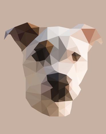 Coco_Polygons.jpg