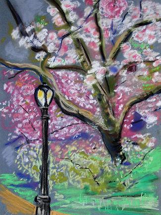 CPCherry BlossomsC2.JPG