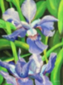 IrisesCam.jpg