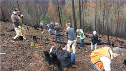 GHS students replanting trees