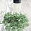 Thumbnail: Jade Gemstone Perfume Oil, Roller Ball