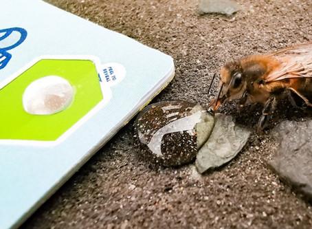 Bee the Revolution
