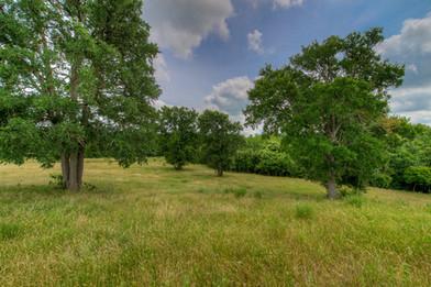 Pasture 1_1573x1050.jpg