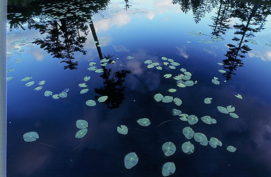 松仙園湿原ヒツジグサ