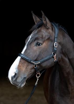 Harry's Horse - Licol en cuir Anatomic Rosegold