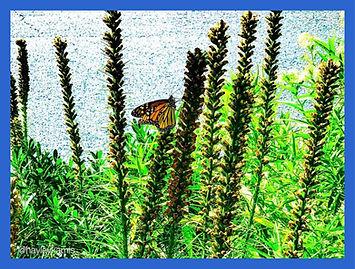 monarch in frame.jpg