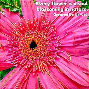Flowering soul.JPG