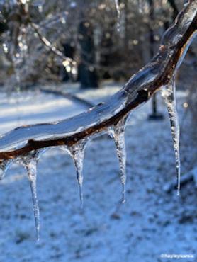 icicle branch.jpeg