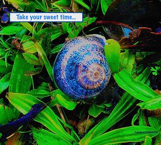 take your timeJPEG.JPEG