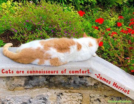 Bermuda cat.JPG