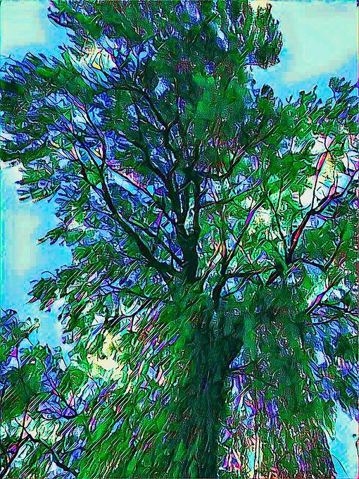 tree of dreams.jpeg