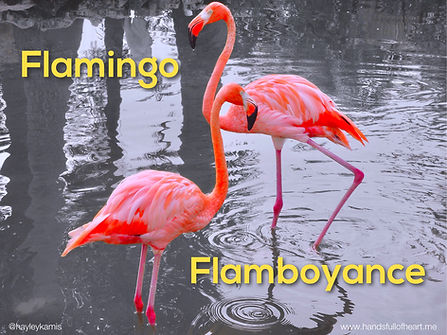 flamingo flamboyance.JPG