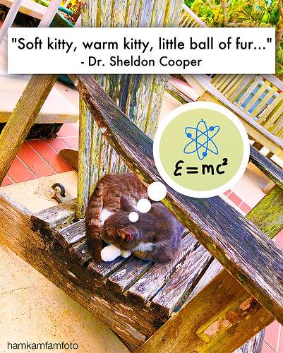 soft kitty.JPG